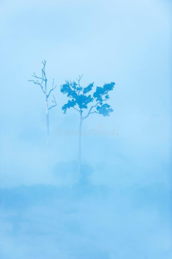 Bäume tot und lebendig im Nebel stockfotografie
