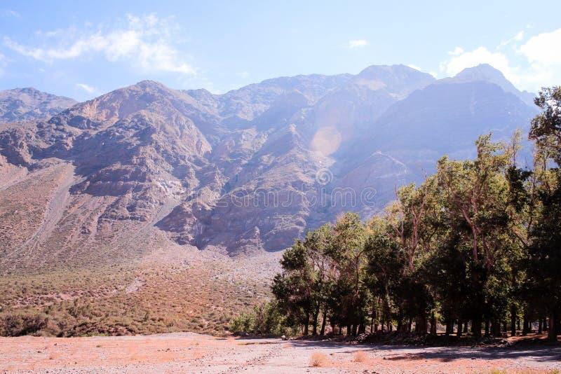 Bäume und Berge in Anden, Santiago, Chile stockbild