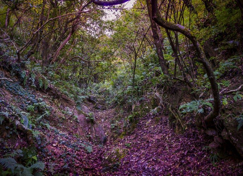 Bäume und Blätter lizenzfreies stockfoto
