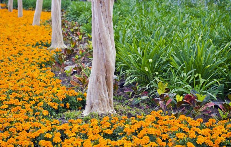 Bäume und Blumen lizenzfreies stockfoto