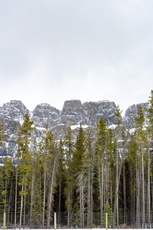 Bäume und Fechten vor Snowy-Gebirgsfelsen lizenzfreie stockfotos