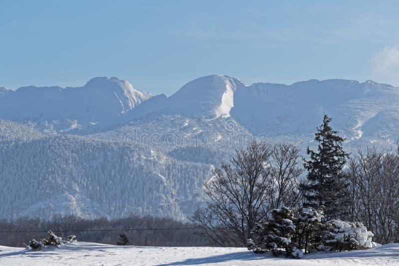 Bäume und Gipfel in einer Winterlandschaft auf der Hochebene von Vercors lizenzfreies stockbild