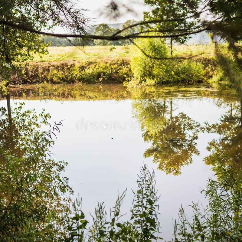 Bäume und Gras, die einen kleinen Bauernhof-Teich gestalten lizenzfreie stockfotografie
