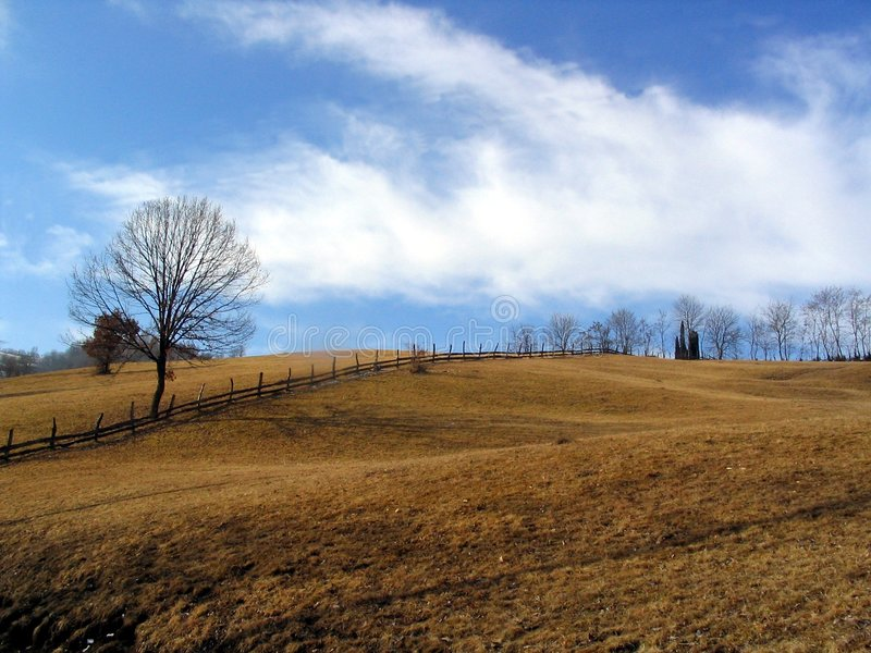 Bäume und Hügel lizenzfreie stockfotografie
