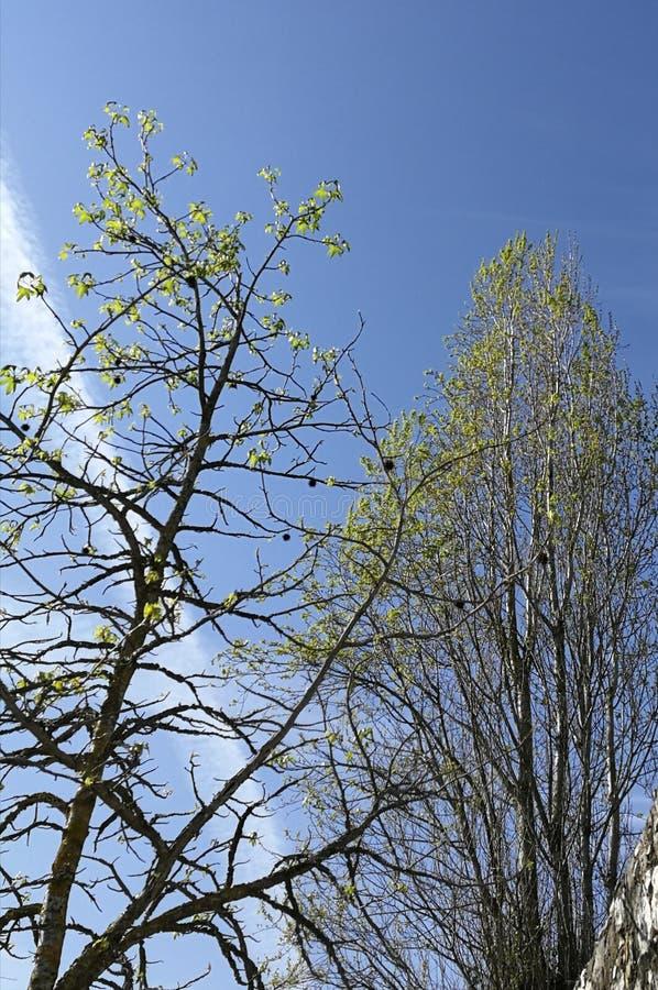 Bäume und Himmelansicht stockfotografie