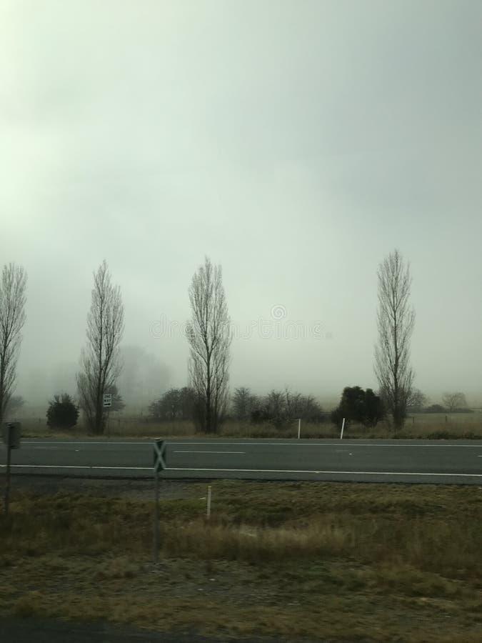 Bäume und Nebel 2 lizenzfreies stockfoto