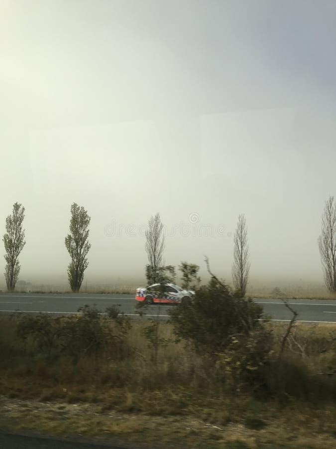Bäume und Nebel 8 lizenzfreie stockbilder