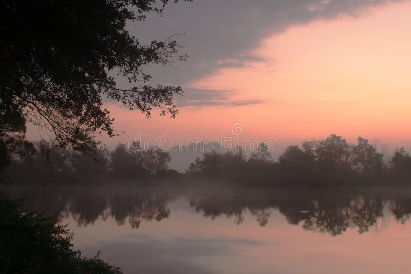 Bäume und nebelhafter Sonnenaufgangmorgensee lizenzfreies stockfoto