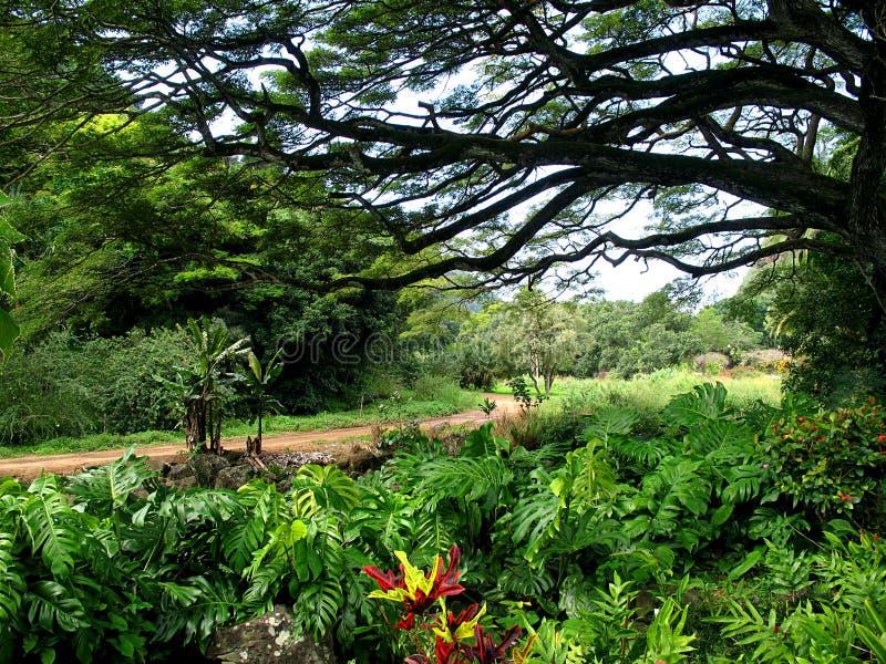 Bäume und Pfad stockbilder