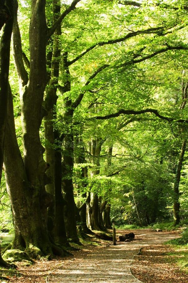 Bäume Und Pfad Lizenzfreie Stockfotografie