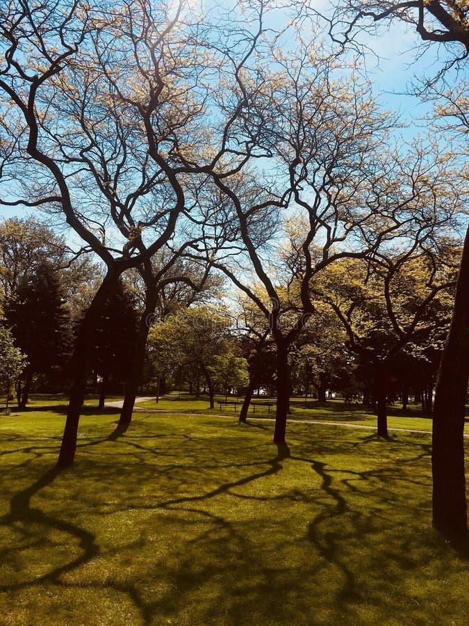 Bäume und Schatten stockfotos
