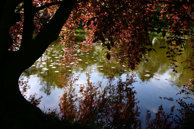 Bäume und Waldherbst stockfotos