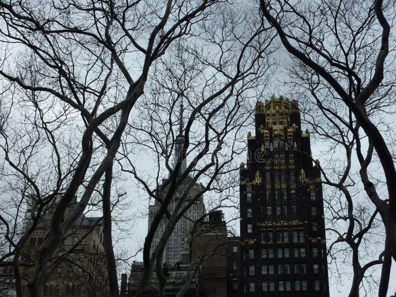 Bäume und Wolkenkratzer lizenzfreies stockbild