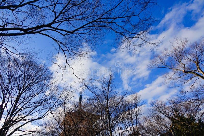 Bäume unter blauem Himmel am sonnigen Tag lizenzfreie stockfotos