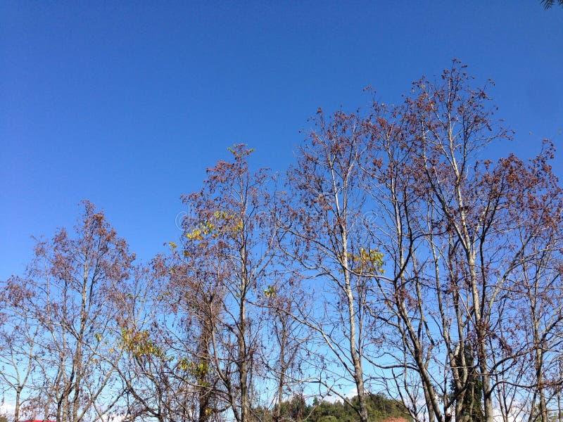 Bäume von Brasilien lizenzfreie stockfotos