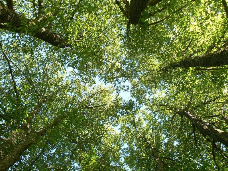 Bäume von unterhalb gesehen stockfotos