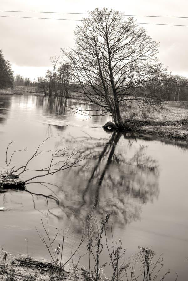 Bäume widergespiegelt in der wasser- flüssigen Flusslandschaft in Schwarzweiss lizenzfreies stockbild
