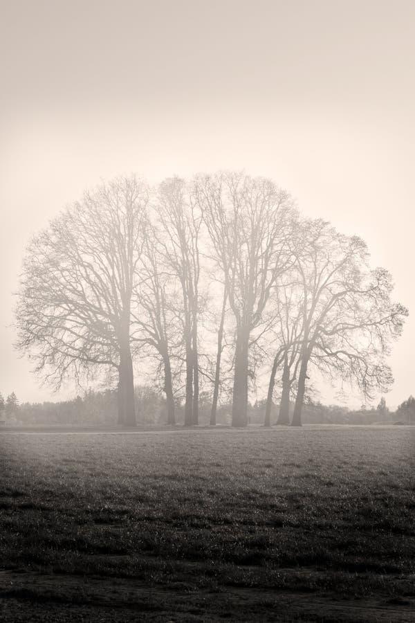 Bäume Woodburn Oregon lizenzfreies stockfoto