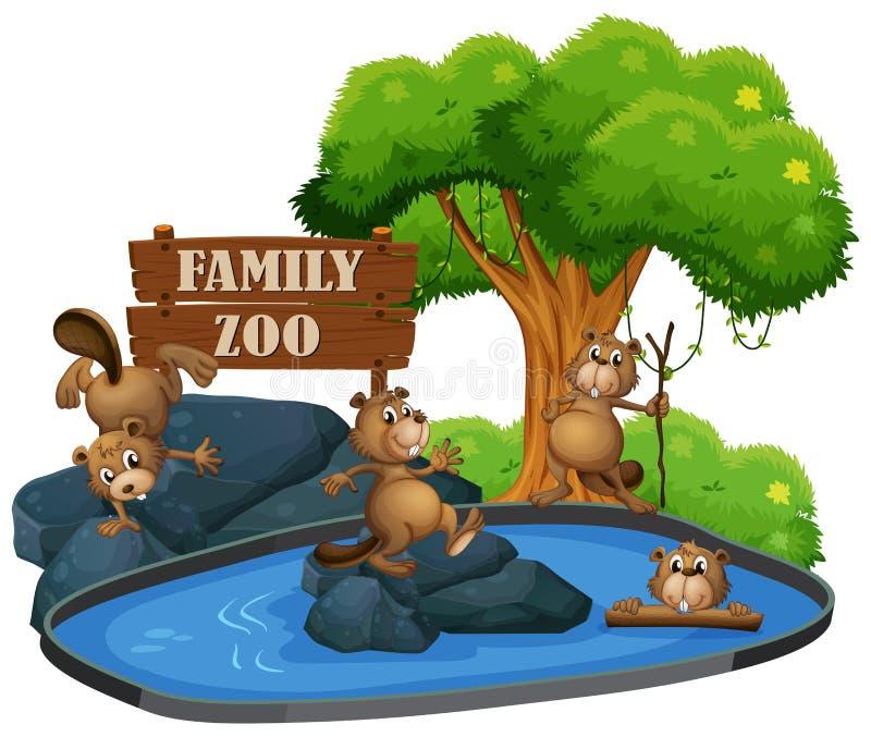 Bäver på zoo royaltyfri illustrationer
