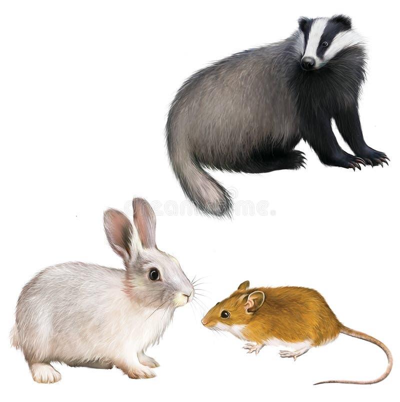 Bäverskinn, kanin och mus royaltyfri illustrationer