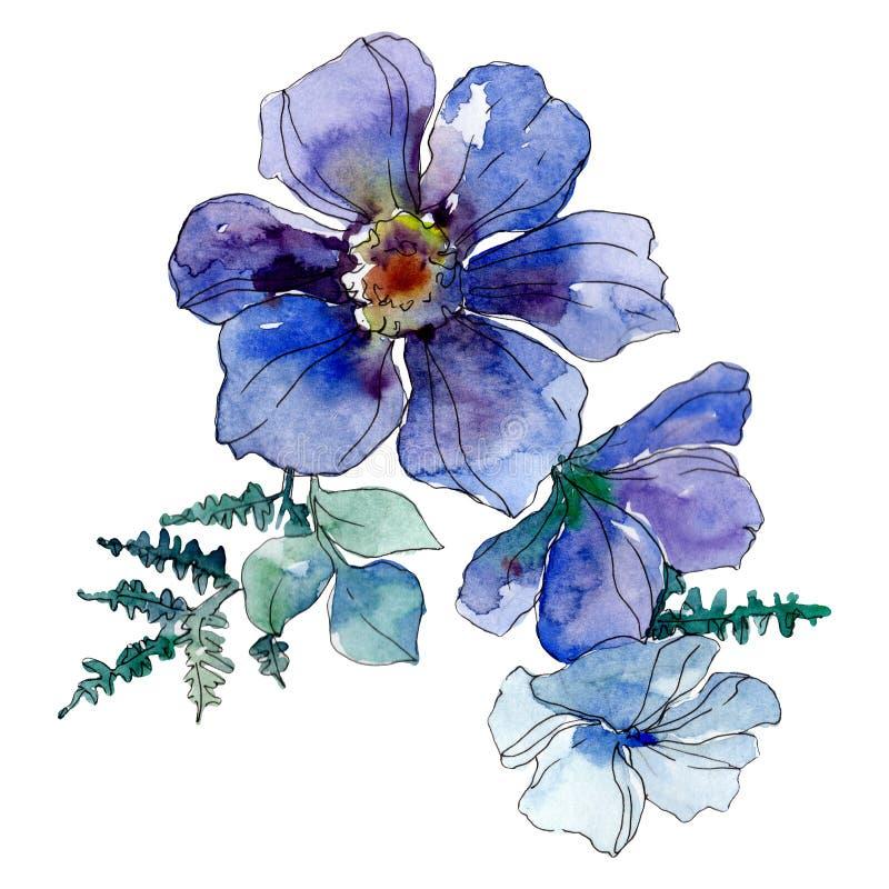 Błękitni anemonowi kwieciści botaniczni kwiaty Akwareli tła ilustracji set Odosobniony bukiet ilustracji element royalty ilustracja