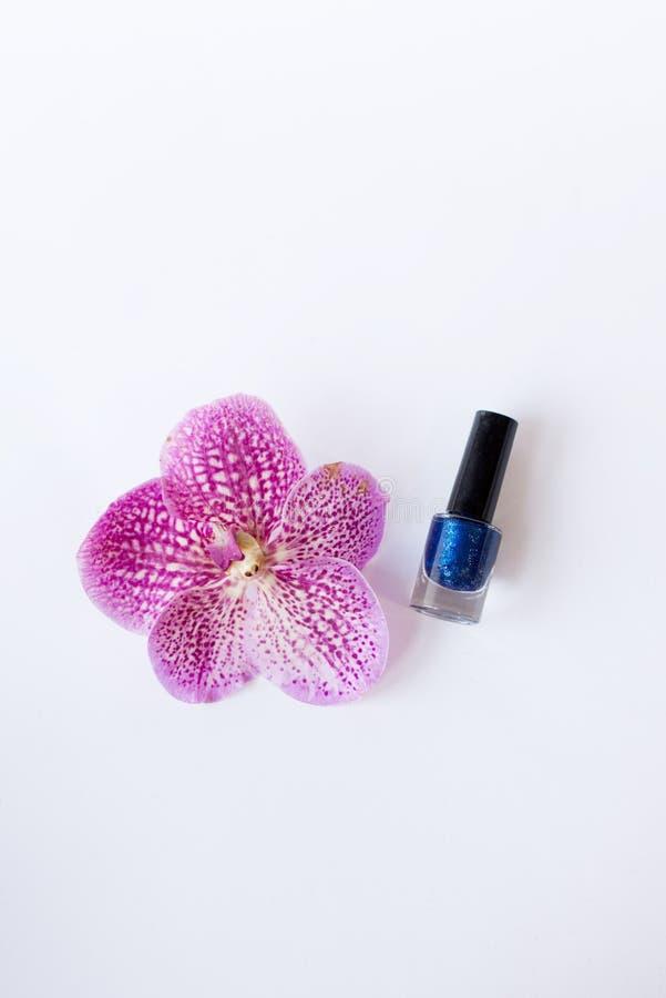 Błękitny gwoździ połysk stojak blisko pięknych menchii kwitnie obrazy royalty free