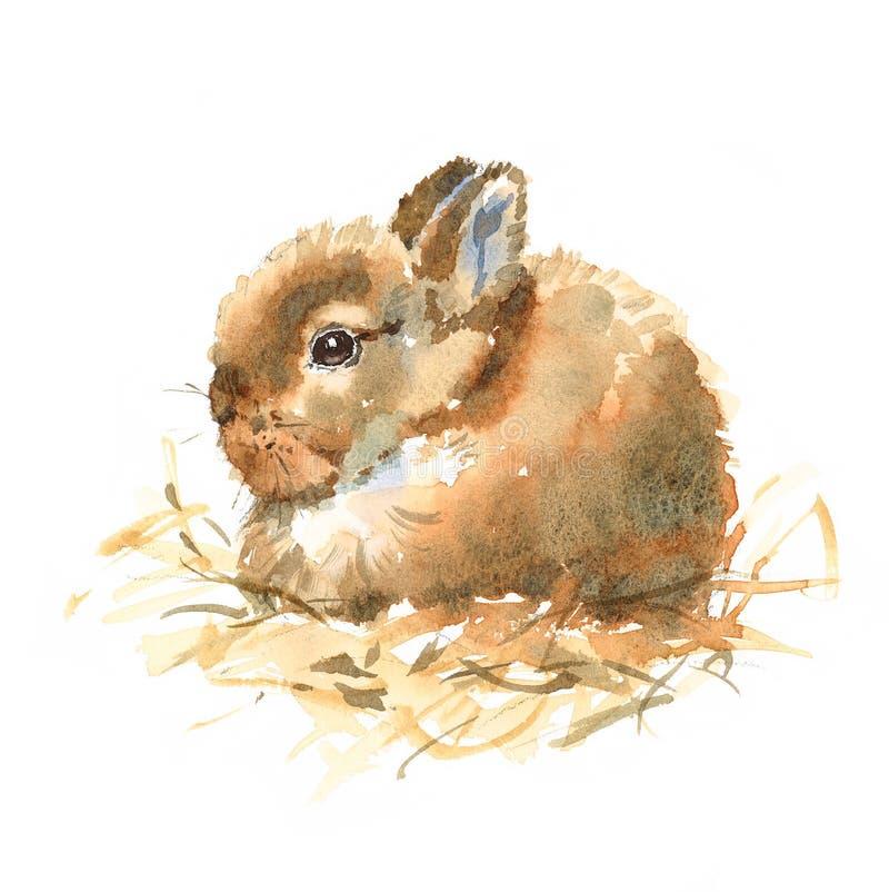 Bébé Bunny Watercolor Animals Illustration Hand dessiné illustration libre de droits