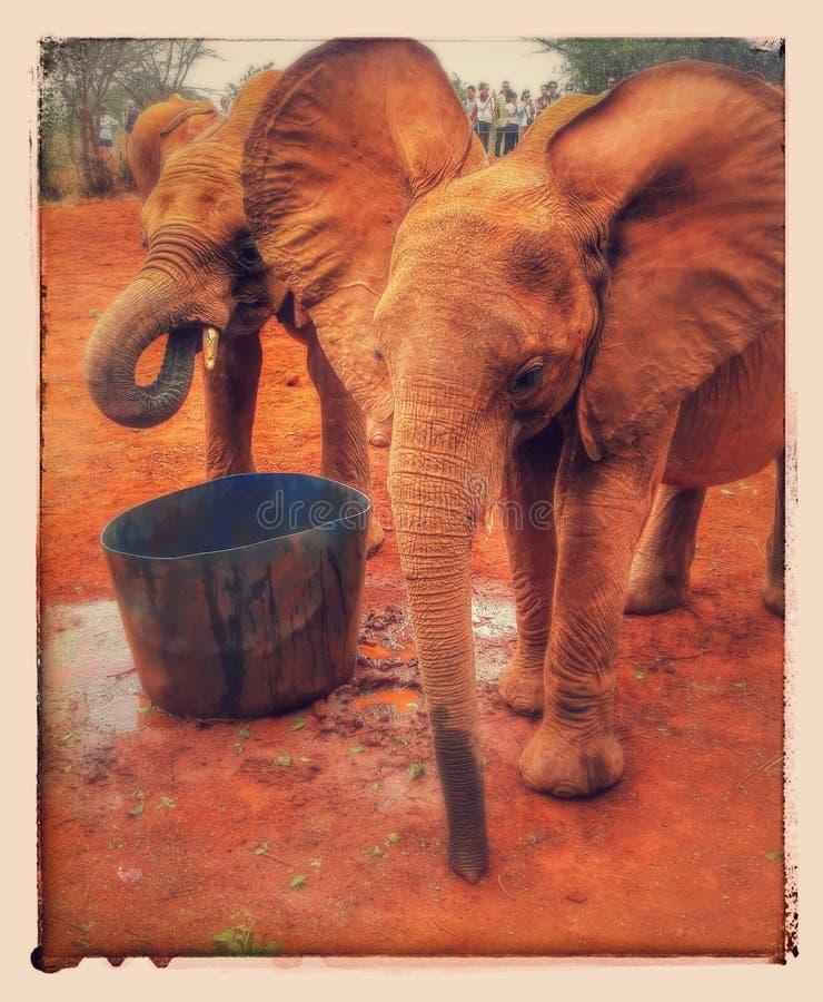 Bébé d'éléphants photos stock