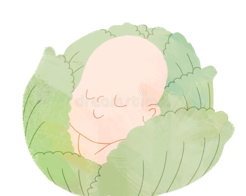 Bébé dans le chou illustration de vecteur