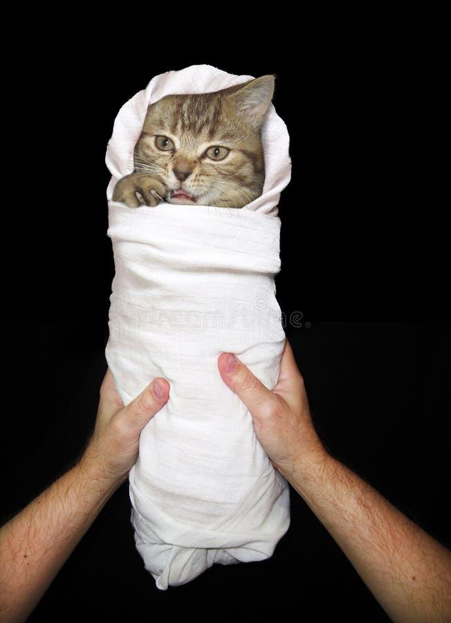 Bébé 1 de chat image stock