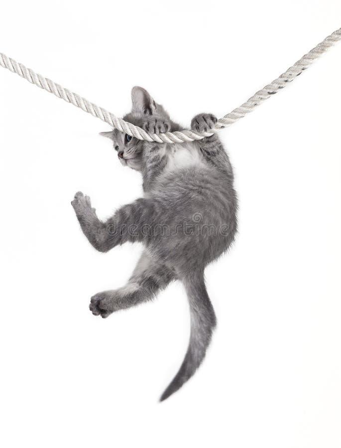 Bébé de chat accrochant sur la corde photos stock