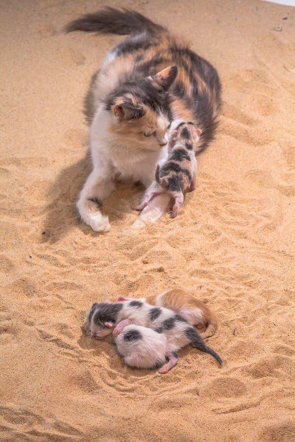 Bébé de chat dans le sable photo libre de droits