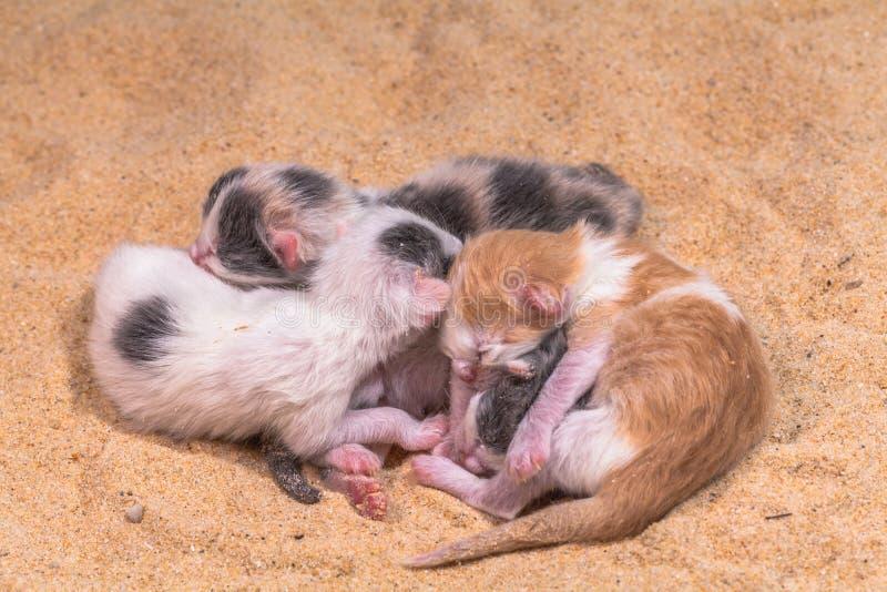 Bébé de chat dans le sable photos stock