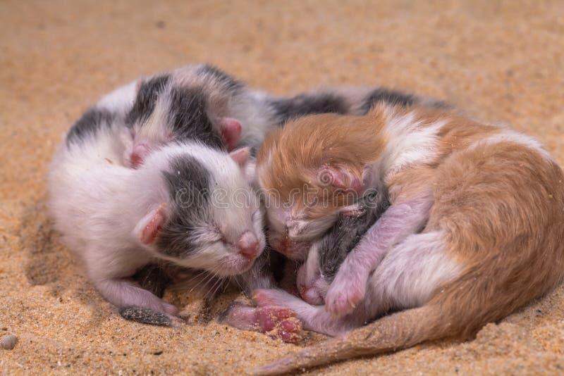 Bébé de chat dans le sable photographie stock