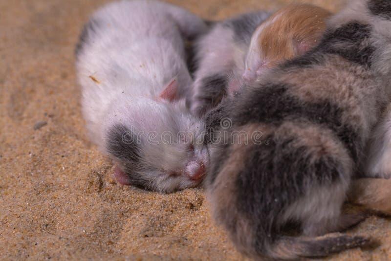 Bébé de chat dans le sable image stock