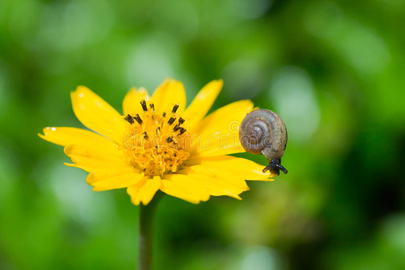 Bébé escargot images libres de droits