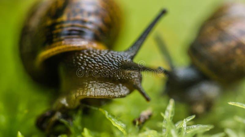 Bébé escargot sur l'herbe photographie stock libre de droits