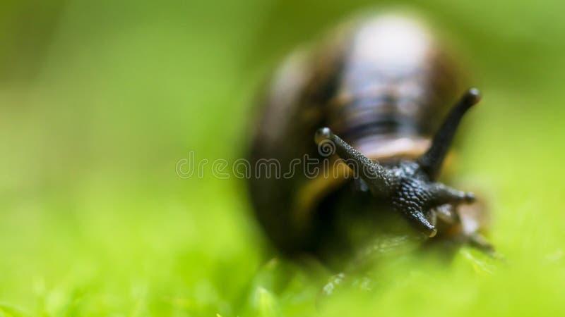 Bébé escargot sur l'herbe images stock