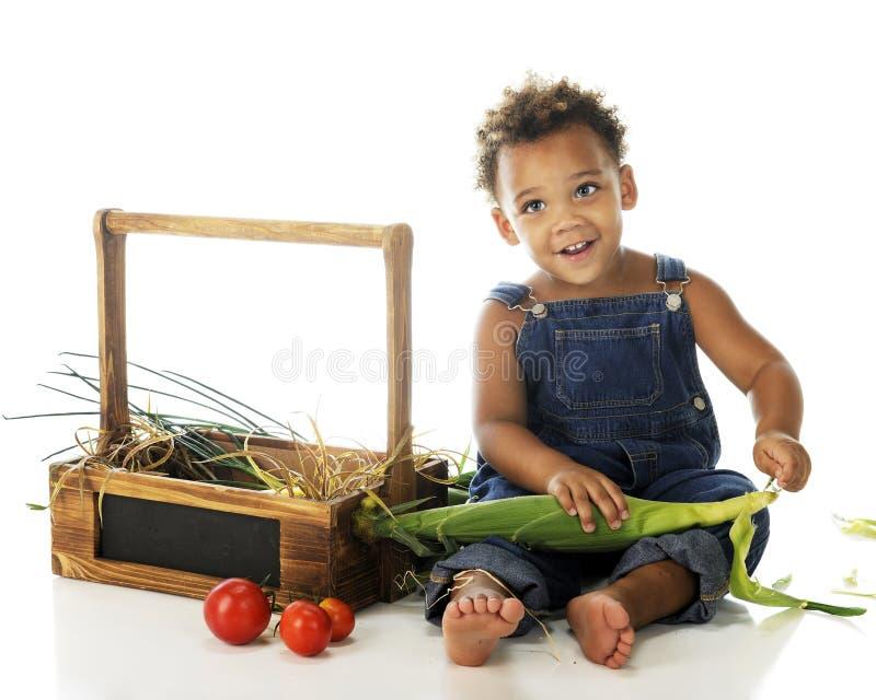 Bébé Husker photos libres de droits