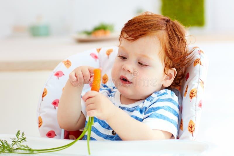 Bébé infantile curieux mangeant la carotte fraîche tout en se reposant dans la chaise d'arbitre sur la cuisine photos stock
