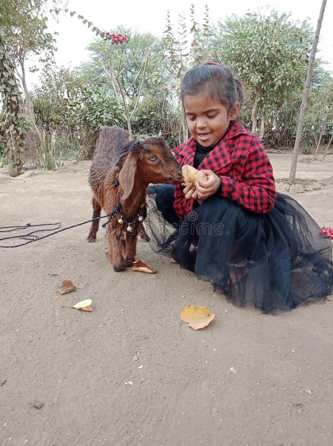 Bébé mignon avec une chèvre sur la rue de l'Inde photographie stock libre de droits