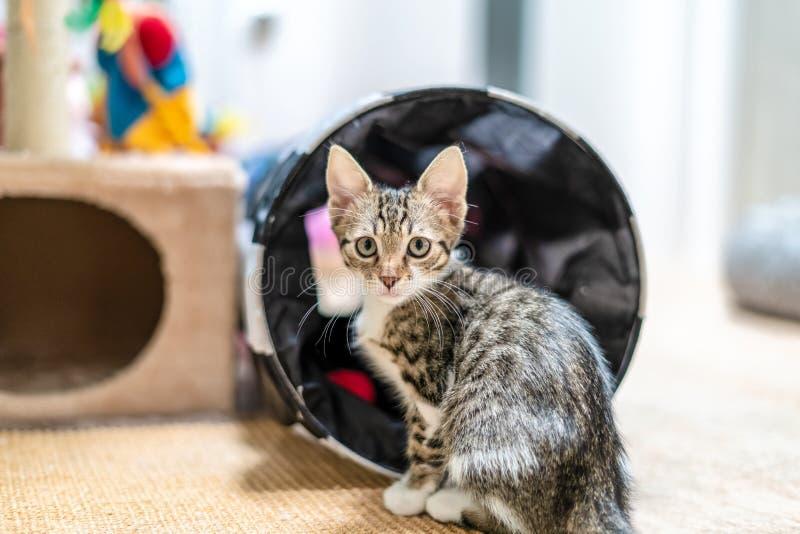 Bébé mignon Cat Portrait At Home image libre de droits