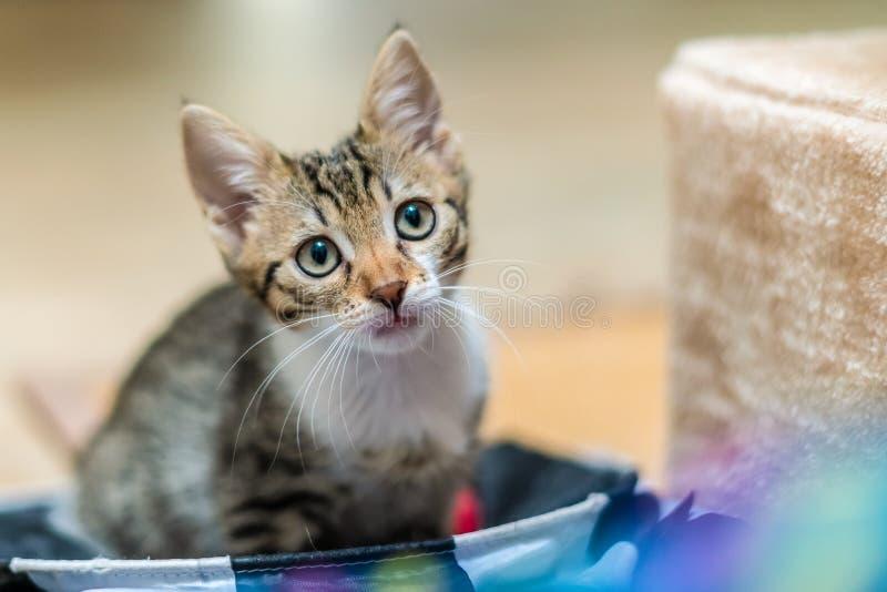 Bébé mignon Cat Portrait At Home photographie stock
