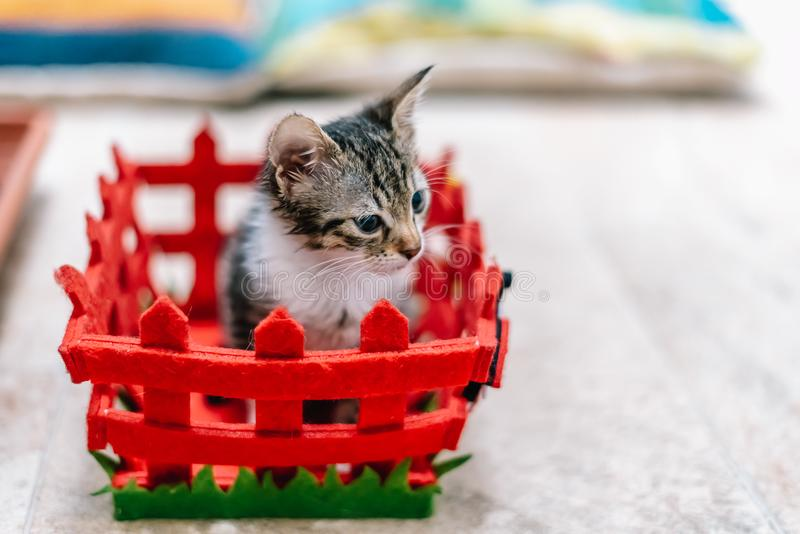 Bébé mignon Cat In Small Basket photo stock