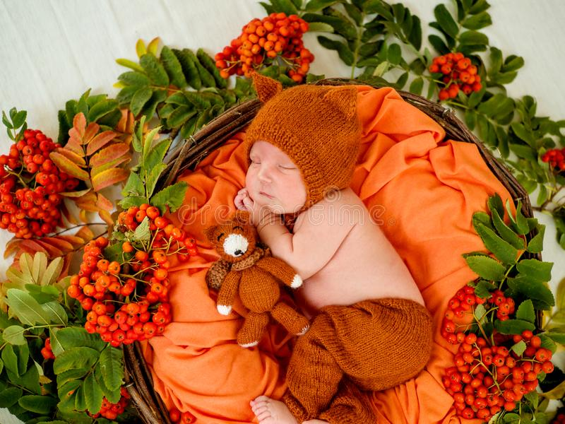 Bébé nouveau-né avec un renard et une sorbe oranges tricotés photo stock