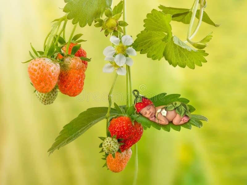 Bébé nouveau-né sur le fraisier image stock