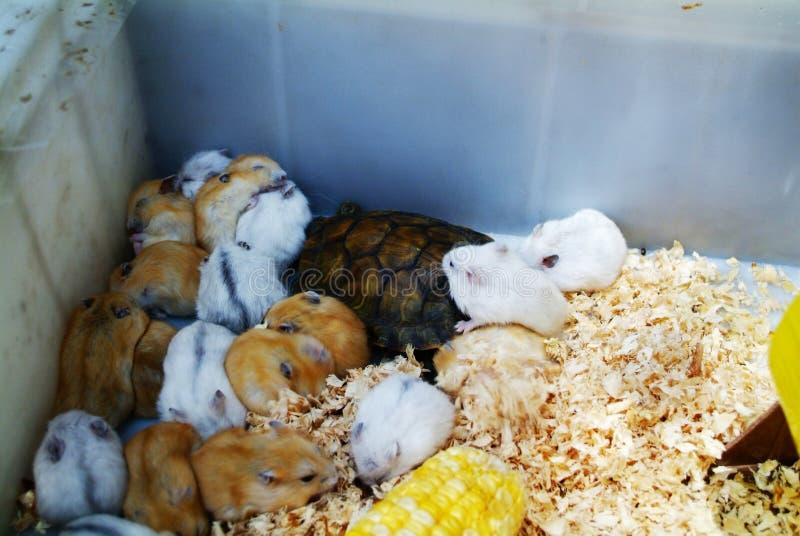 Bébés de hamster photographie stock