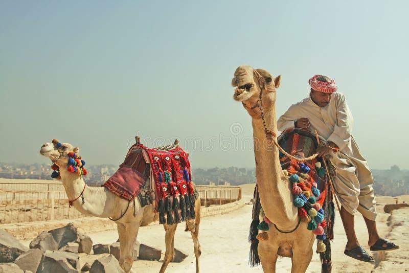 Bédouin avec des chameaux dans le désert giza Égypte Septembre 2008 image libre de droits