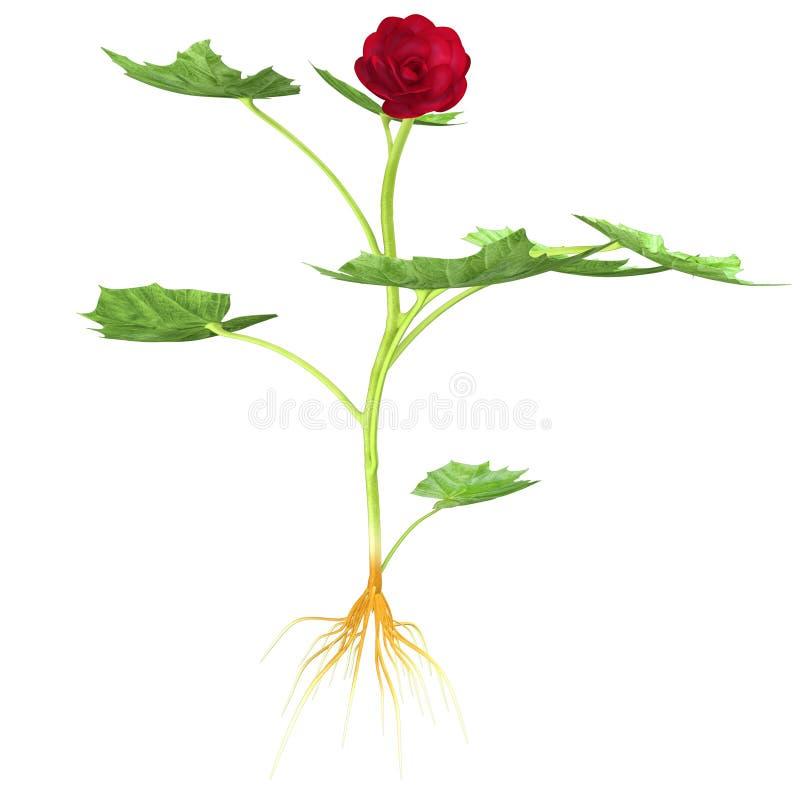 Download Bégonia 3D photo stock. Image du centrale, floral, groupe - 45365264