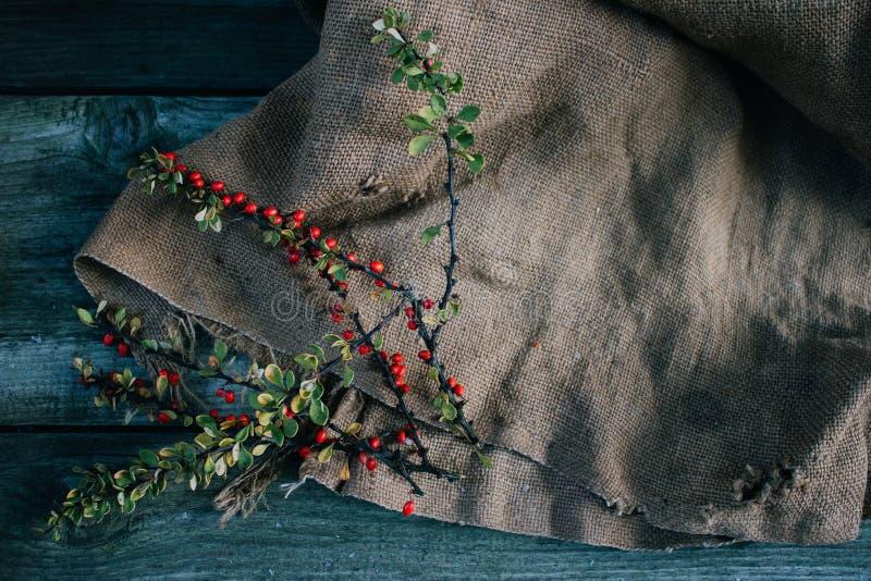 Bérbero del otoño en la arpillera y el fondo de madera fotografía de archivo